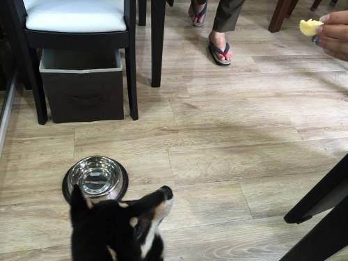 DCカフェ
