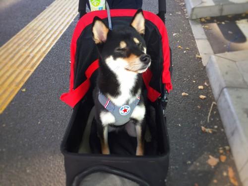 ペット・犬の全国イベント情報|2018年度版〜9月11日更新〜