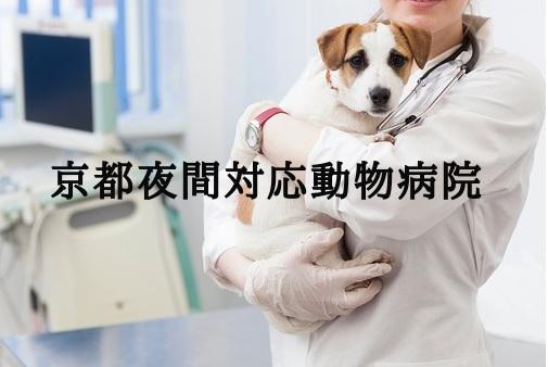 京都 夜間動物病院
