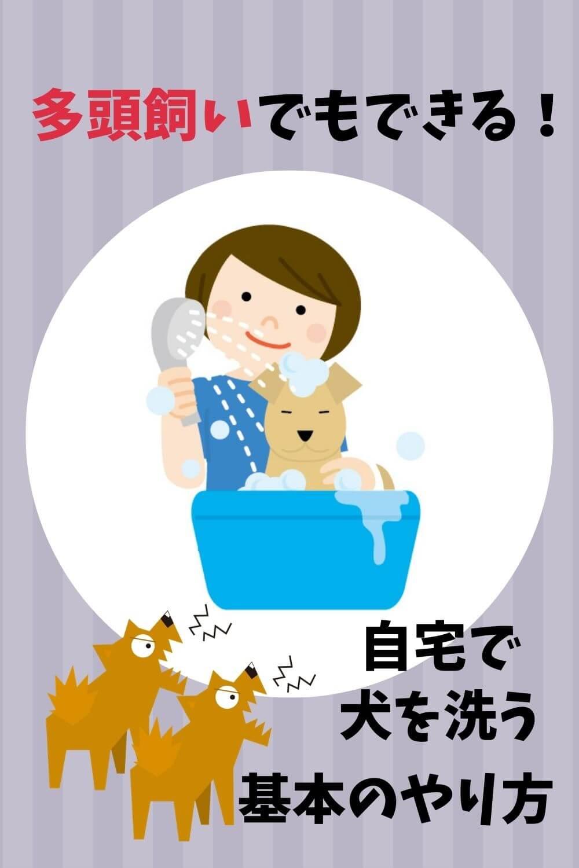 多頭飼いで犬を洗う方法