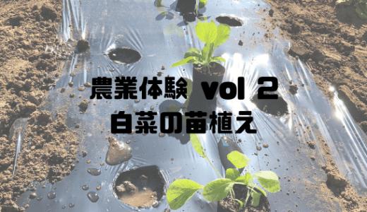 子供と農業体験に行ってみた! vol.2  白菜の苗植え 農業の基本を学ぶ