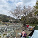 新戸キャンプ場 桜