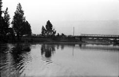 1959_necko_klonownica_wyc (4)