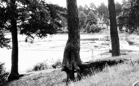 1966_07_prace-ogrod__lipowiec_biale (28)