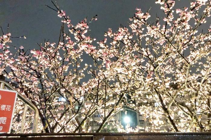 台北櫻花 情人節內湖約會攻略 內湖樂活公園夜櫻季這樣玩