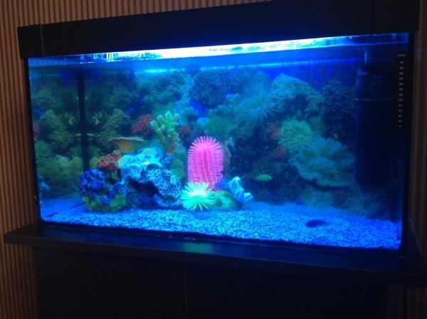 Ылғалдан қорғайтын өнімдерді аквариум декорында қолдануға болады