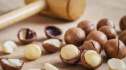 Bibit Kacang Macadamia - travel.tribunnews.com