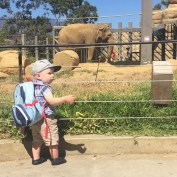 Elephants at the Santa Barbara Zoo