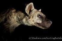 kurt jay bertels, camera trap, camera trap images, wildlife photography, BBC wildlife magazine, photography, spotted hyaena, close up, night