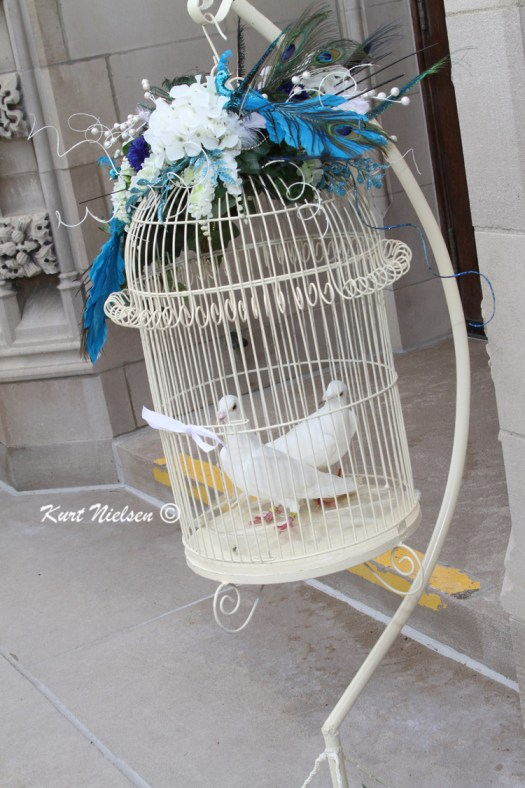 Doves at Weddings