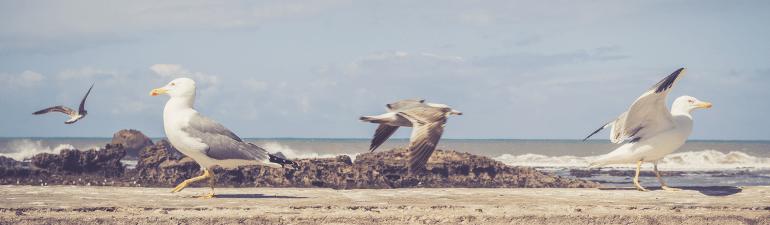 header gullsbeach