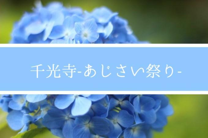 久留米のあじさい寺『千光寺』。梅雨を彩る約7000株の花を楽しめる『あじさい祭り』に訪れました。