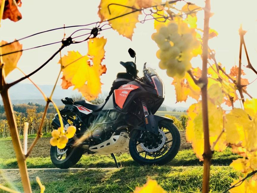 Wie ich den Herbst lieben lernte