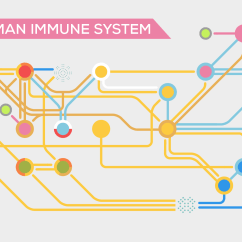 Immune System Diagram Mass Haul Explained In A Nutshell  Kurzgesagt The