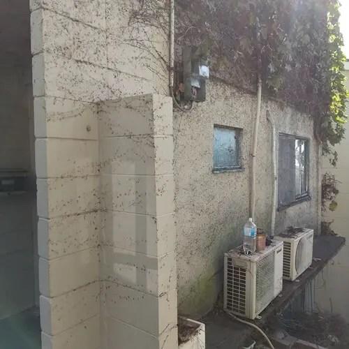 ツタ除去後の外壁状況