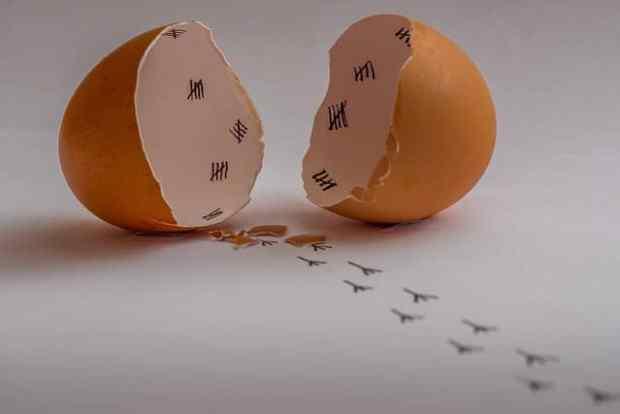 卵の殻の再利用術 5選「捨てるだけではもったいない」