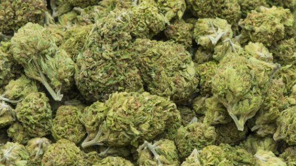 road_to_recovery_marijuana