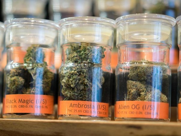 CannabisMarijuana_SBM9