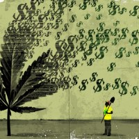 12 Ways to Get Paid for Smoking Weed