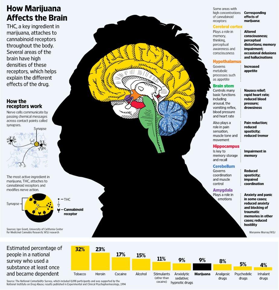 how-marijuana-affects-the-brain-thcfinder