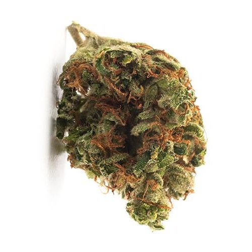 Indica-Dominant TWD INDICA (BLEND) by TWD THC 14-24% CBD 0-0.1%