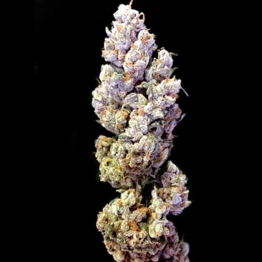Crockett's Sour Tangie Marijuana Seeds