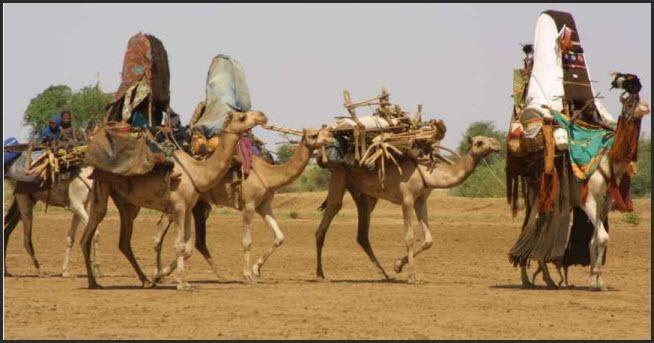التأمين الصحي بجنوب دارفور يعتمد الضان والماعز بدلا عن الرسوم النقدية للرحل