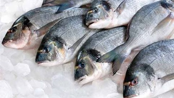 الأسماك ..هل يمكن ان تصبح مصدر دخل قومي