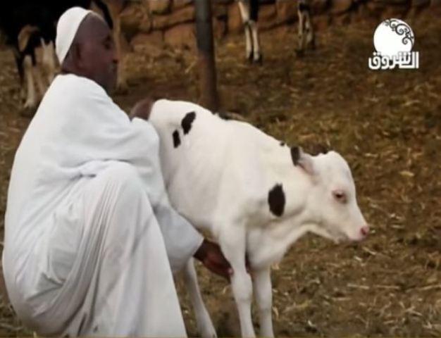 """بالفيديو.. """"عجلة"""" يتيمة تحول حياة صاحبها السوداني من رجل بسيط لمليونير"""