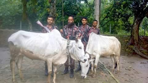 চুয়াডাঙ্গা বিজিবি