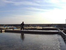 ハマグリの養殖場
