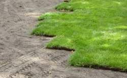 trawa z metra - pokazówka