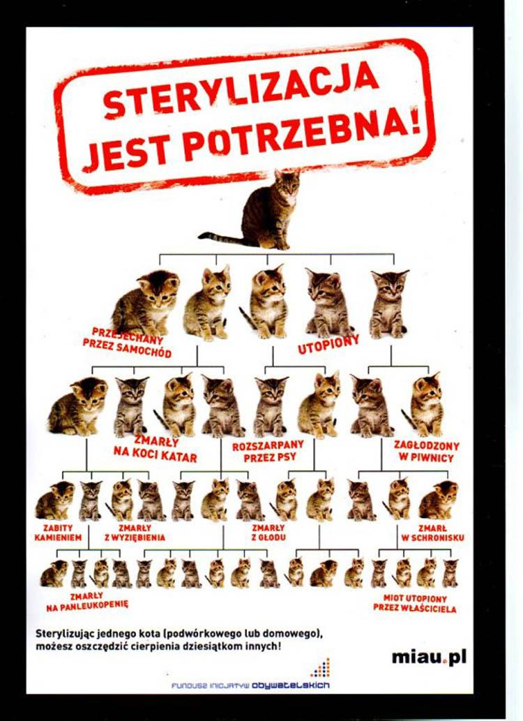 Dlaczego trzeba sterylizować koty?