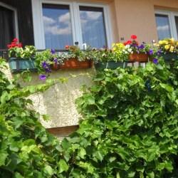 Konkurs na najpiękniejszy balkon i ogródek