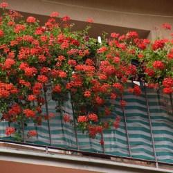 Rozstrzygnięto konkurs na najpiękniejszy balkon