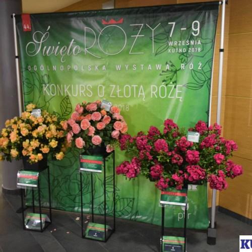Zwycięskie Róże są wyeksponowane w Kutnowskim Domu Kultury