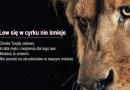 Cyrk bez zwierząt w Kutnie – podpiszmy petycję!