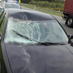 Łoś na autostradzie spowodował trzy kolizje