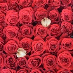 Wystawa róż ogrodowych - która róża najpiękniejsza?