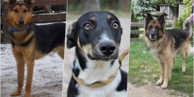 Psy ze schroniska w Wojtyszkach czekają na domy
