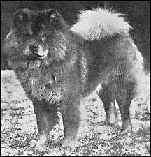 1920-Chow