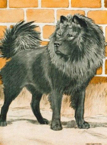 1926 chow by Charles Livingston Bull