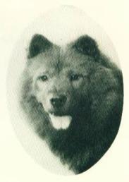 1935 chow