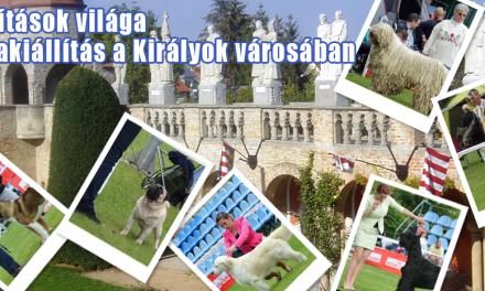 Kiállítások világa – Kutyakiállítás a Királyok városában