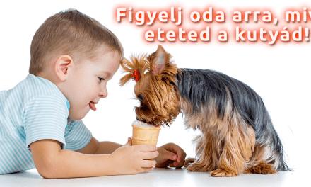 Kutyáink egészségvédelme – Veszélyes élelmiszerek