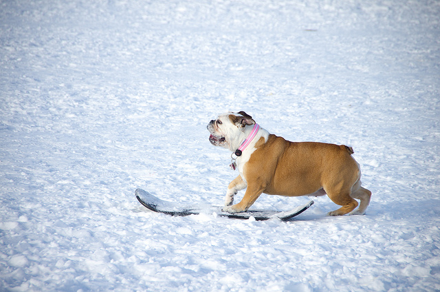 fehova_winter_dog_show_2015
