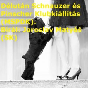 schnauzer_klubkiallitas