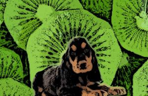 A kutyák és a kiwi