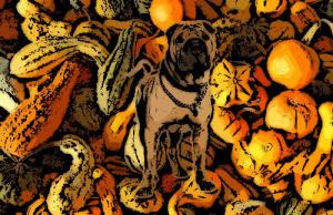 A kutyák és a tök