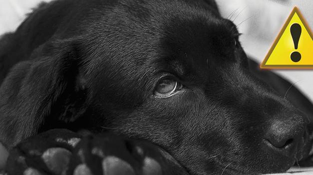 Betegségjelző tünetek a kutyáknál, hogy felismerd, ha baj van!